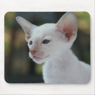 Baby Siamese Kitty Mouse Pad