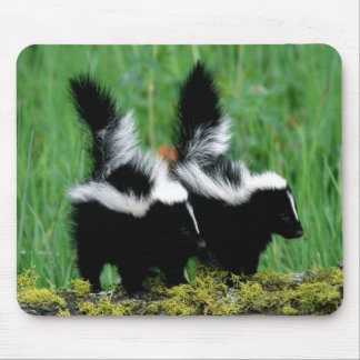 Baby Skunks In The Grass Mousepad