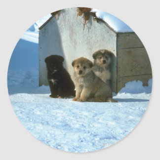 Baby sled dogs, Greenland Classic Round Sticker