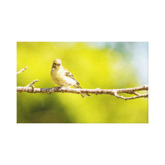 """Baby Sparrow"" canvas print"