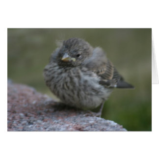 """Baby Sparrow"" Photo Greeting Card"