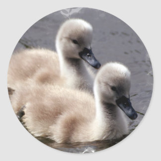 Baby Swans Stickers