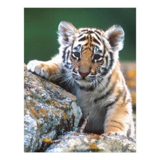 Baby Tiger Cub Letterhead