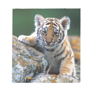 Baby Tiger Cub Notepad