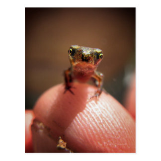 Baby Toad / Tadpole Postcard