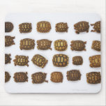 Baby tortoises arranged in rows mouse pad
