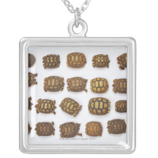 Baby tortoises arranged in rows silver plated necklace