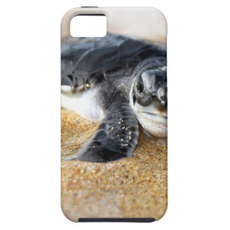 baby-turtle. iphone case