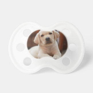 Baby Yellow Labrador Puppy Dog laying on Belly Pacifier