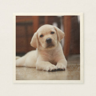 Baby Yellow Labrador Puppy Dog laying on Belly Paper Napkin