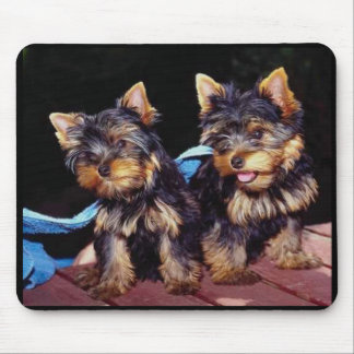 Baby Yorkies Mousepad