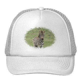 Baby Zebra Baseball Hat