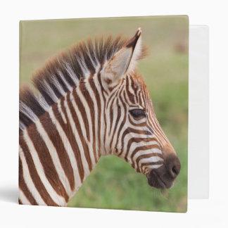 Baby zebra head, Tanzania 3 Ring Binders