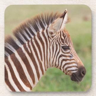 Baby zebra head, Tanzania Coaster