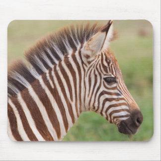 Baby zebra head, Tanzania Mouse Pad