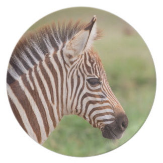 Baby zebra head, Tanzania Party Plates