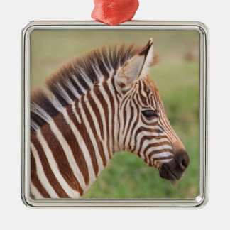 Baby zebra head, Tanzania Silver-Colored Square Ornament