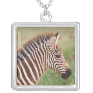 Baby zebra head, Tanzania Silver Plated Necklace