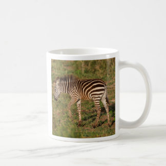 Baby Zebra walking, South Africa Coffee Mug