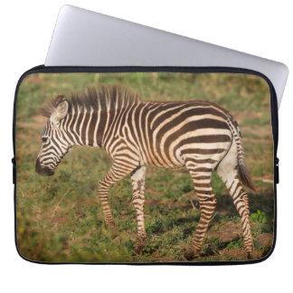 Baby Zebra walking, South Africa Computer Sleeve