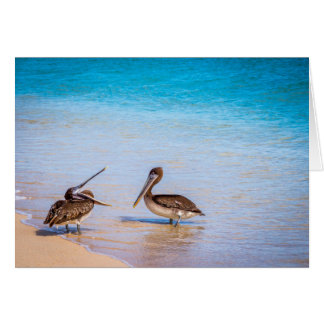 Bachas Beach Pelicans Card