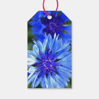 Bachelor Buttons Pack Of Gift Tags