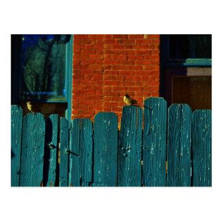 Back Alley Birdwatching Postcard