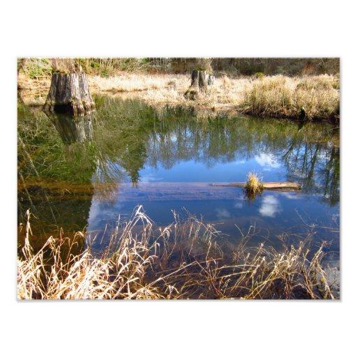Back Beaver Pond Photographic Print