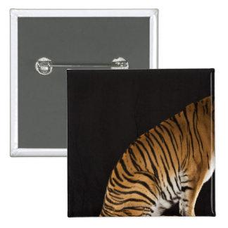 Back end of tiger sitting on platform 2 inch square button