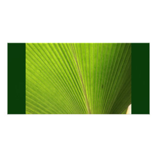 Back Lit Palm Leaf in Mexico Photo Cards