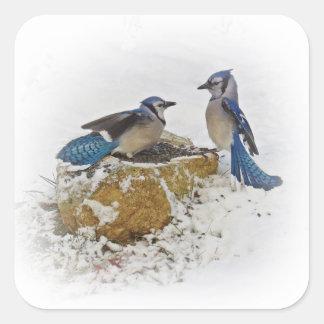 Back Off - Birds Square Sticker