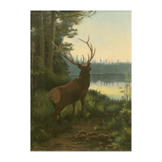 Back view of Elk Looking over a Lake Acrylic Wall Art