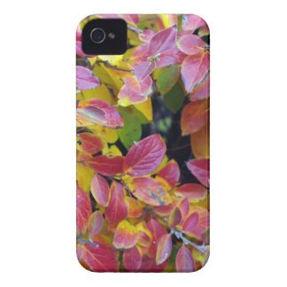 Background of bright red and yellow leaves of a bu iPhone 4 covers