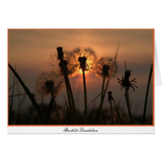 Backlit Dandelion Card