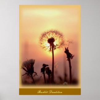Backlit Dandelion - Chisasibi Quebec Canada Poster