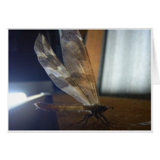 Backlit Dragonfly Card