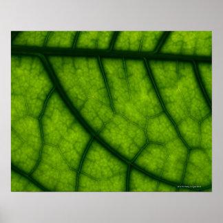 Backlit Green Leaf Poster