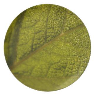 Backlit leaf plates