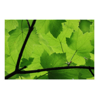 Backlit Leaves Print
