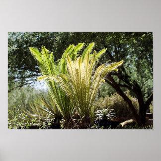 Backlit palms poster