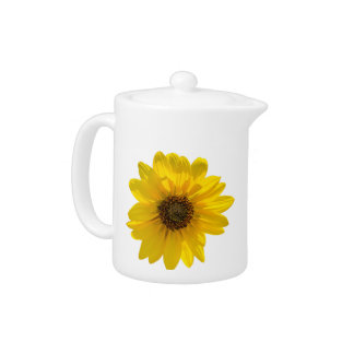 Backlit Sunflower (Helianthus)