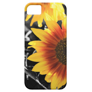 Backlit Sunflower with B&W iPhone 5 Covers