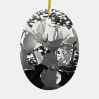 Backlits white cyclamen flowers on dark background ceramic ornament