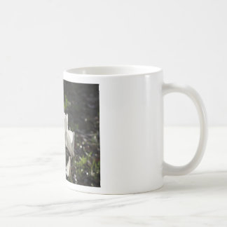 Backlits white cyclamen flowers on dark background coffee mug