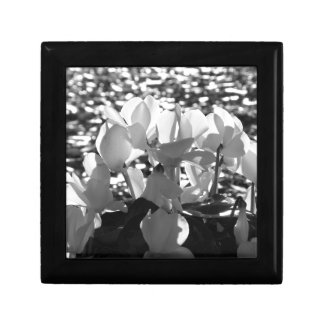 Backlits white cyclamen flowers on dark background gift box