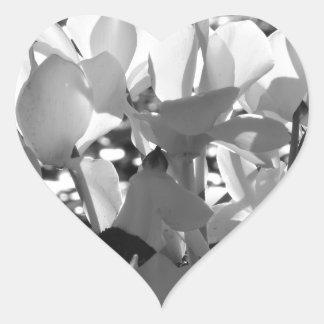 Backlits white cyclamen flowers on dark background heart sticker