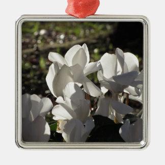 Backlits white cyclamen flowers on dark background metal ornament