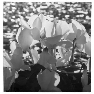 Backlits white cyclamen flowers on dark background napkin