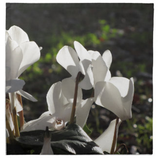 Backlits white cyclamen flowers on dark background napkin