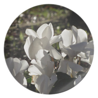 Backlits white cyclamen flowers on dark background plate